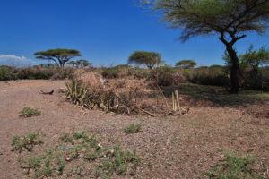 verlatingsangst op de savanne